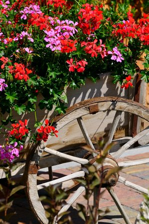 Photo of the garden Badia - Pedraces