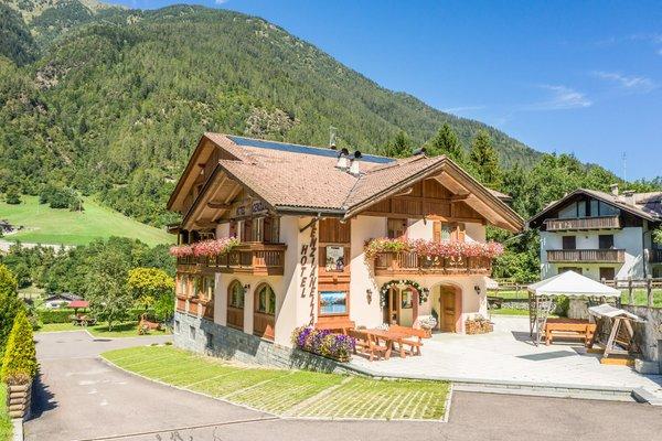 Foto esterno in estate Genzianella