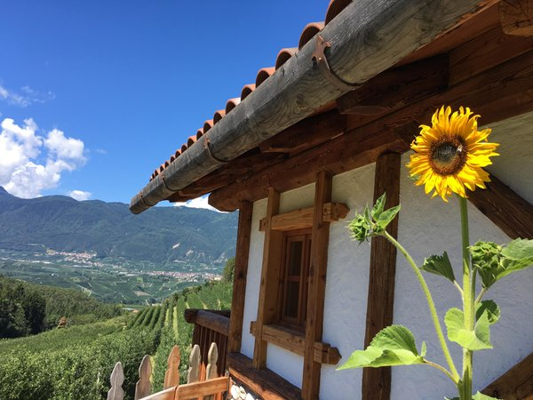 Foto del balcone Alpenvidehof