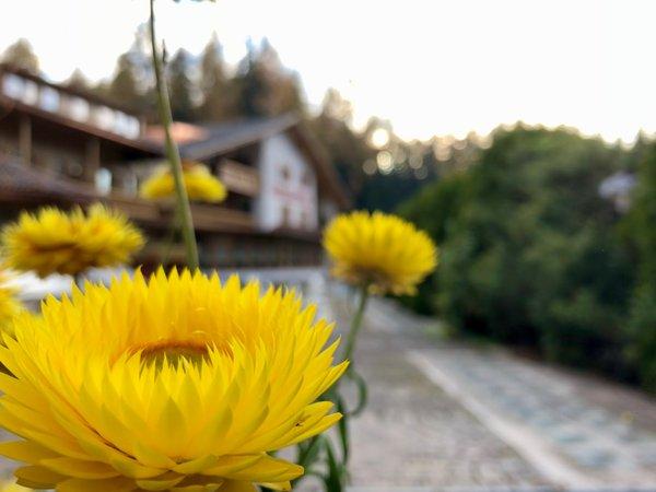 Photo of the garden Sarnonico (Fondo - Mendola)