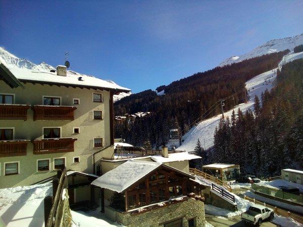 Foto esterno in inverno Abete Blu