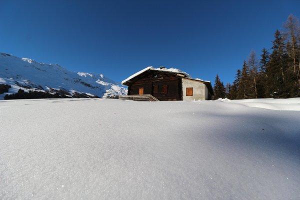 Gallery Valfurva - S. Caterina (Bormio e dintorni) inverno