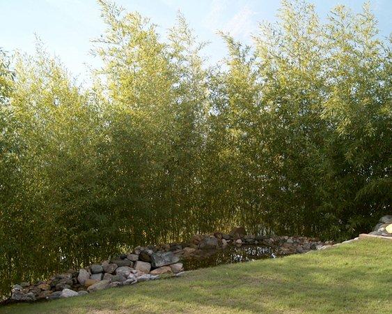 Foto del giardino Castione Andevenno (Sondrio - Valmalenco)