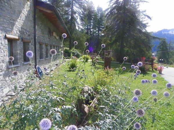 Foto del giardino La Thuile (Monte Bianco)
