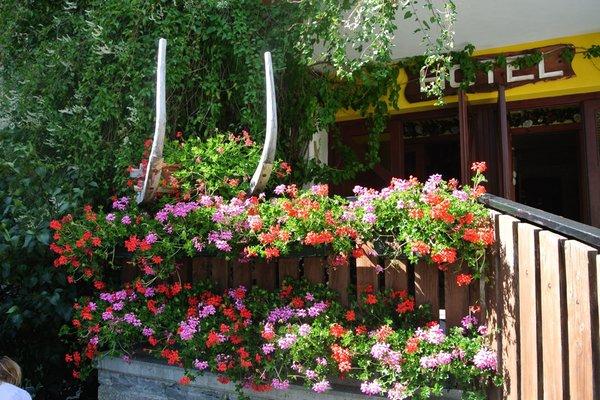 Foto del giardino Gressoney-Saint-Jean (Monte Rosa)