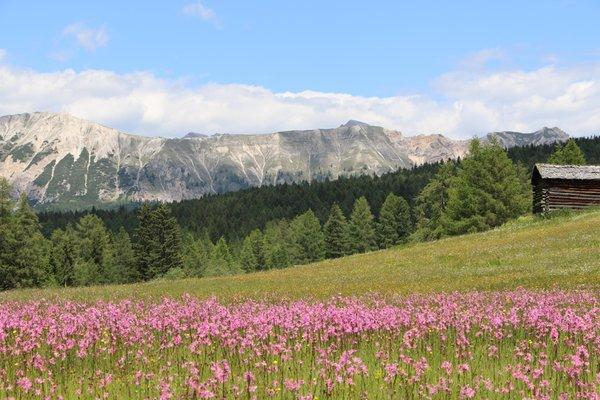 Panorama La Val