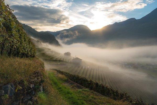 Position Winery La Perla Teglio (Tirano - Media Valle)