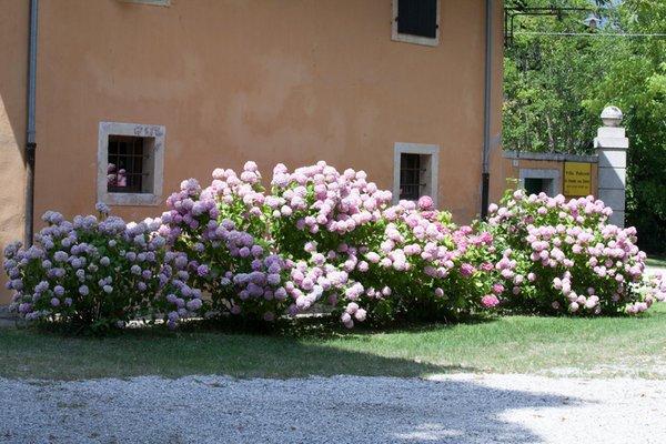 Foto del giardino Aviano