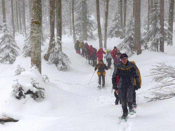 Attività invernali Alpi Friulane