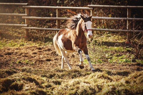 Riding farm Bram's Ranch com.xlbit.lib.trad.TradUnlocalized@7854efd