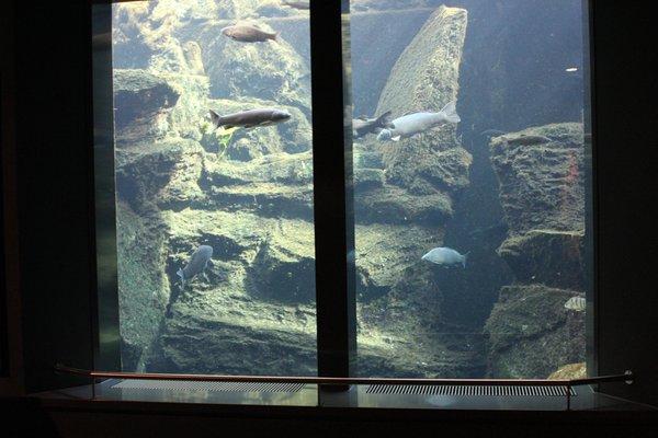 Foto di alcuni dettagli Centro visite Aquaprad nel Parco Nazionale dello Stelvio
