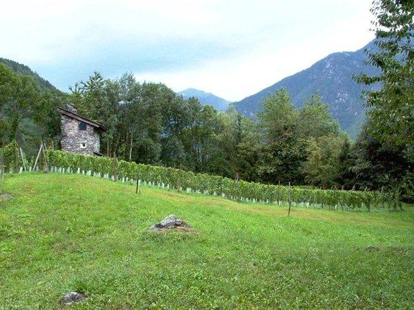 La posizione Appartamenti in agriturismo Torre Scilano Piuro (Valchiavenna)