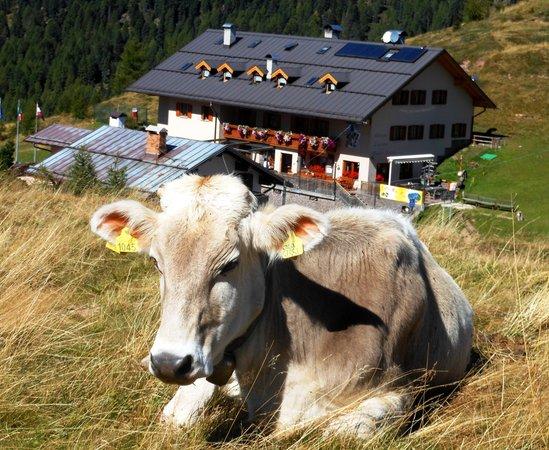 Foto estiva di presentazione Rifugio Capanna Passo Valles