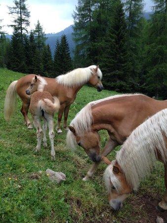 Flora Alpina - Rifugio con camere  Falcade