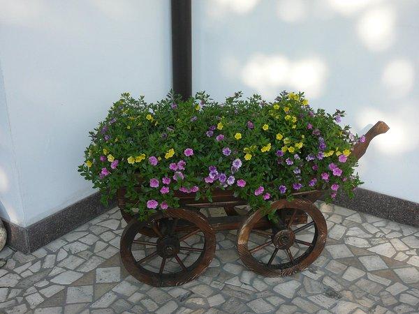 Foto del giardino Transacqua (Primiero)