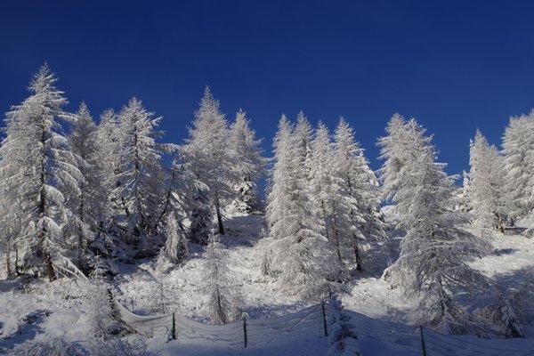 Bildergalerie Primiero-Tal Winter