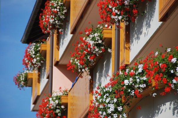 Foto esterno in estate Antares