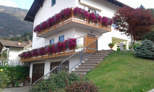 Foto esterno in estate Viola Arrigo