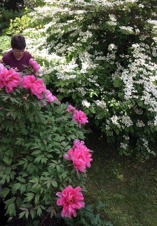 Photo of the garden Siror (Primiero)