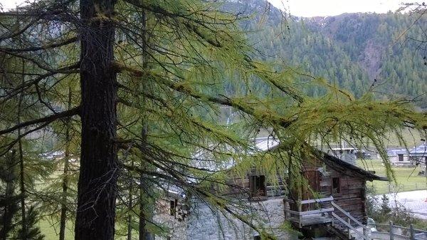 Foto esterno in estate Galli - Pont Lonch