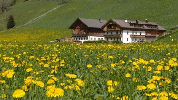 Photo exteriors in summer Parggenhof