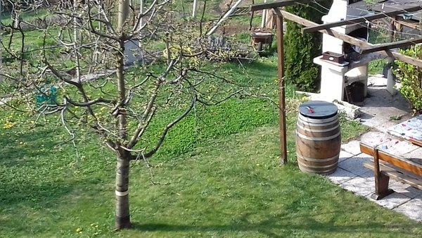 Photo of the garden Trento