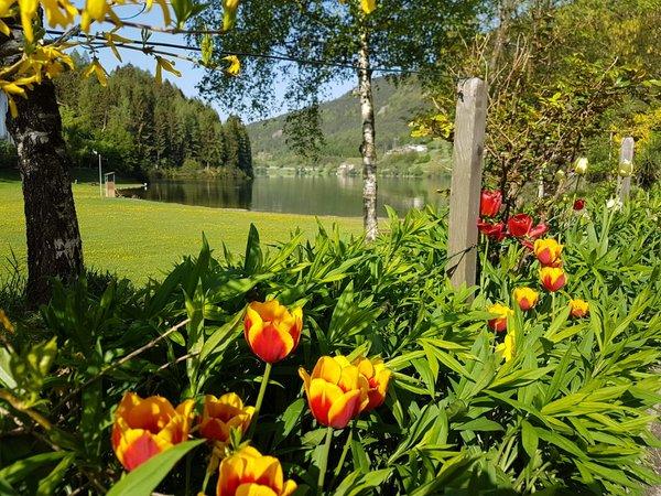 Foto del giardino Bedollo di Piné