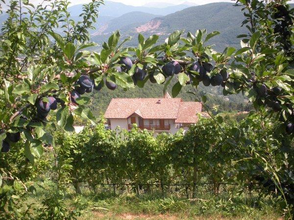 La posizione B&B in agriturismo Maso Pomarolli Giovo (Valle di Cembra)