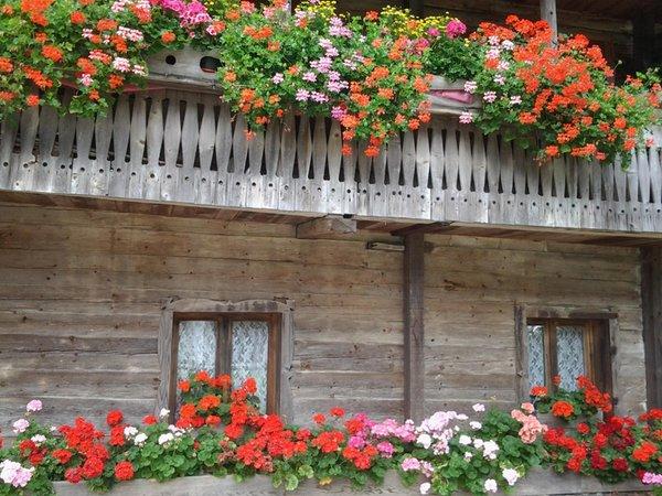 Photo exteriors in summer Casa Zambon