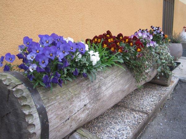 Photo of the garden Padola (Comelico Superiore)