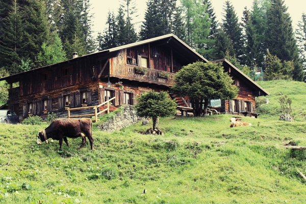 Summer presentation photo Mountain hut with rooms Forcella Zovo