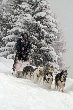 Winter Präsentationsbild Husky Village - Sleddog Ranch