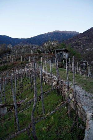 Gallery Berbenno di Valtellina (Sondrio - Valmalenco) estate