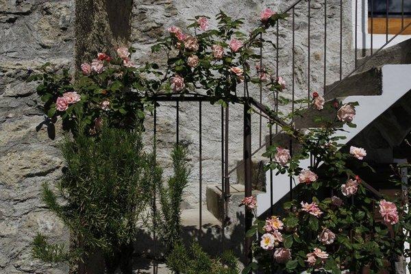 Foto del giardino Berbenno di Valtellina (Sondrio - Valmalenco)