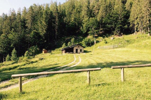 Foto Außenansicht im Sommer Cercenà