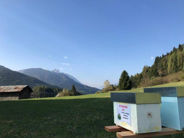Foto esterno in estate Apicoltura The Honey Family