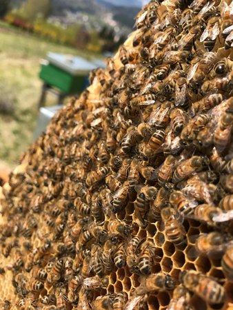Foto di presentazione Apicoltura The Honey Family