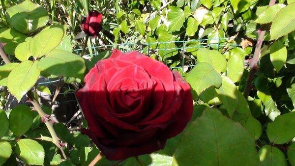 Foto del giardino S. Antonio - Pozzo (Strada del Vino Nord)