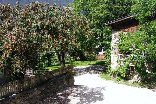Foto del giardino Tarres - Laces
