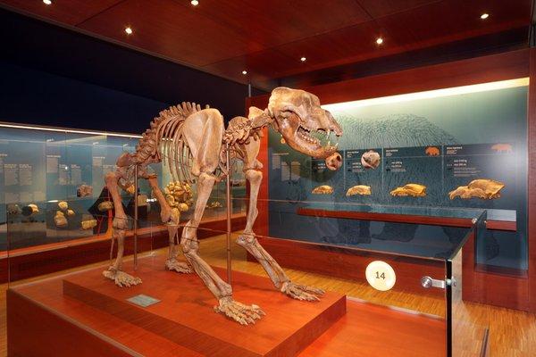 Foto di presentazione Museum Ladin Ursus ladinicus