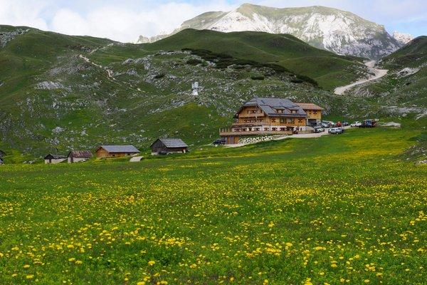 Summer presentation photo Mountain hut Sennes
