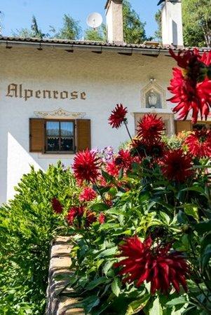 Foto esterno in estate Haus Alpenrose