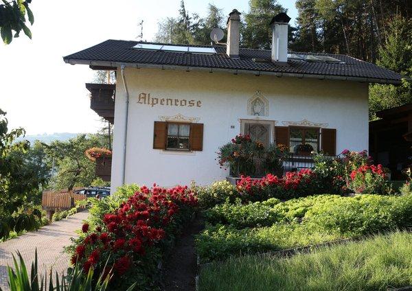 Foto estiva di presentazione Haus Alpenrose - Camere + Appartamenti 2 soli