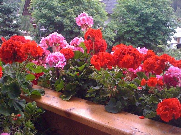 Foto del balcone Ciasa Isidor