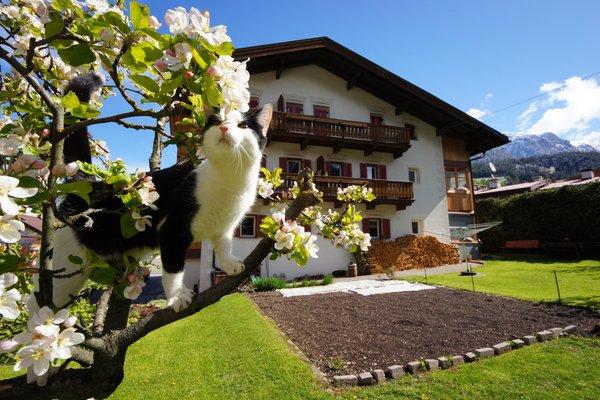 Photo exteriors in summer Ciasa Villa Maria