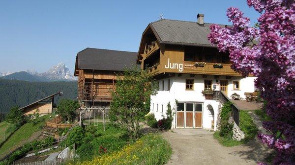 Sommer Präsentationsbild Maso Jung Hof - Ferienwohnungen auf dem Bauernhof 3 Blumen