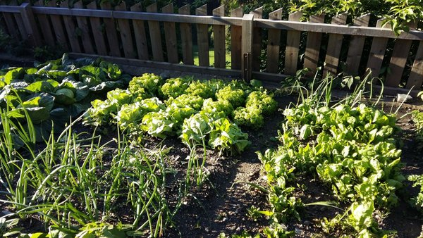 Photo of the vegetable garden