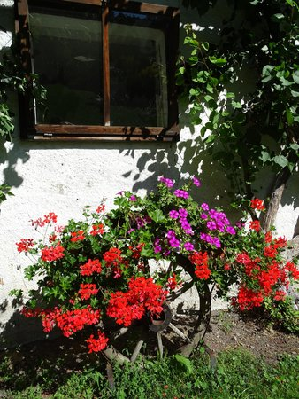 Photo of the garden Stegona / Stegen (Brunico / Bruneck)