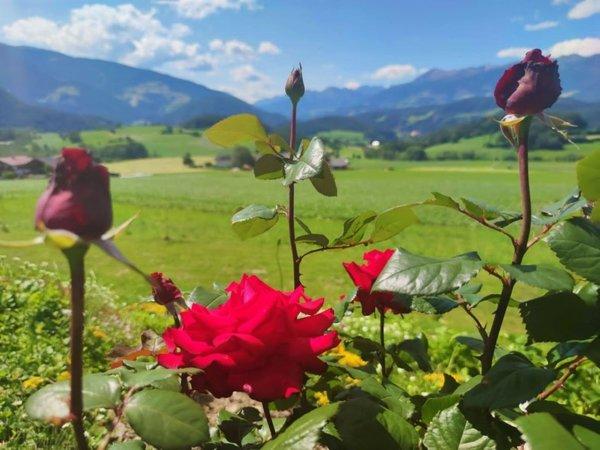 Foto del giardino San Lorenzo di Sebato