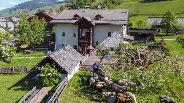 Sommer Präsentationsbild Ferienwohnungen auf dem Bauernhof Osteria Plazores - rustic sleep